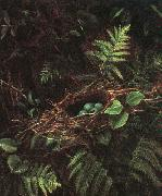 Fidelia Bridges Bird's Nest and Ferns oil painting artist