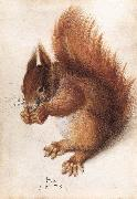 HOFFMANN, Hans Squirrel wf oil painting picture wholesale