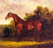 John F Herring Negotiator, the Bay Horse in a Landscape oil painting artist