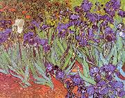 Vincent Van Gogh Irises oil painting artist
