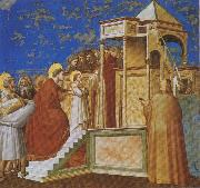 GIOTTO di Bondone Presentation of the Virgin in the Temple oil painting artist