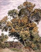 Thomas frederick collier Study of an Oak Tree oil painting artist