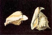 Napoletano, Filippo Two Shells oil painting picture wholesale