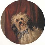 Percy Gray The Artist's Dog (mk42) oil painting picture wholesale