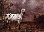 POTTER, Paulus The Spotted Horse af oil painting