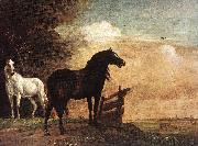 POTTER, Paulus Horses in a Field zg oil painting