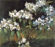 William Stott of Oldham White Rhododendrons oil painting reproduction
