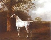 Agasse, Jacques-Laurent White Horse in Pasture oil painting reproduction