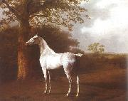 Agasse, Jacques-Laurent White Horse in Pasture oil painting
