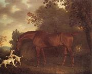 Clifton Tomson A Bay Hunter and Two Hounds in A Wooded Landscape oil painting reproduction