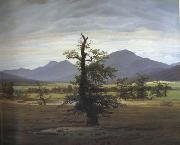 Caspar David Friedrich Landscape with Solitary Tree (mk10) oil painting reproduction