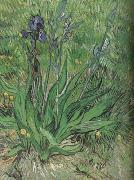 Vincent Van Gogh The Iris (nn04) oil painting reproduction